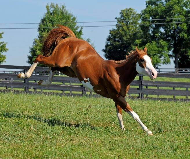 horse-bucking